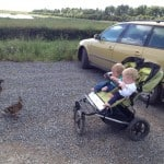 Pair of friendly ducks coming to welcome us at RSPB Frieston Shore