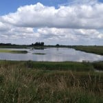 View around RSPB Freiston Shore Saltwater Lagoon