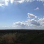 Saltwater Marsh RSPB